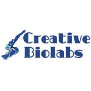 antibody engineering services